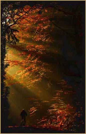 l_arbre_de_vie