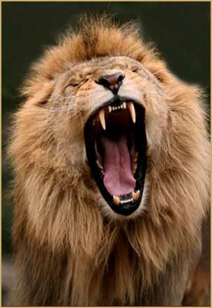le_lion_et_lagneau