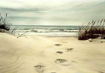 les_traces_dans_le_sable